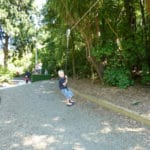 Images from our recent playground project at New Plymouth DC - Pukekura Park